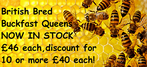 Banner For Queen Bees For Sale